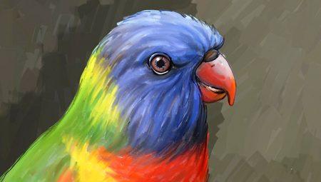 Illustrazione parrot